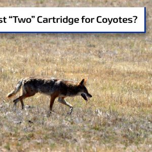 The Best Caliber for Nuisance Coyotes | Gun Talk Radio
