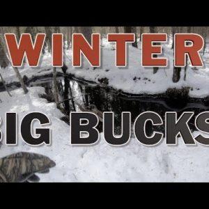 TideWe Winter Big Bucks | Cedar Swamp Stand