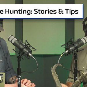 Dove Hunting Gems | Gun Talk Hunt