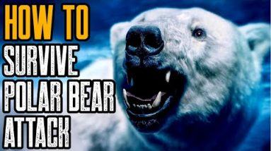 HOW TO SURVIVE A POLAR BEAR ATTACK - Is There Any Way?