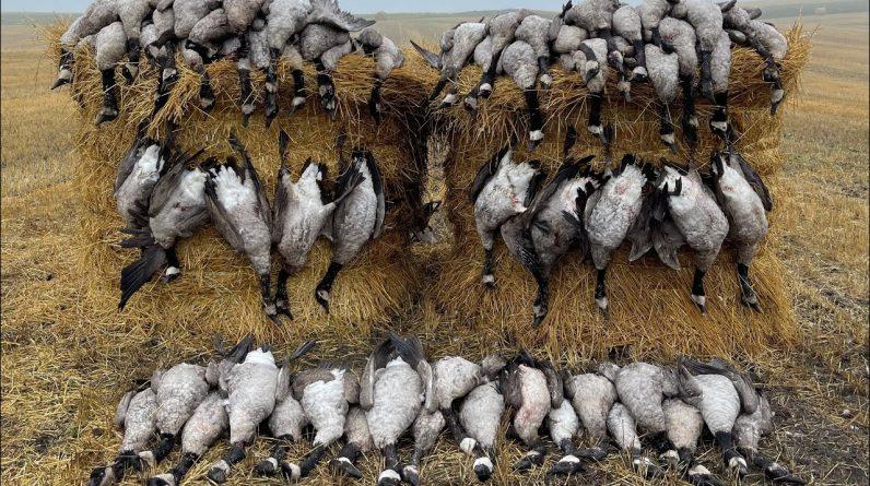 2021 North Dakota Goose Hunting | 63 Bird Hunt!!!