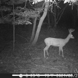 Checking Trail Cameras Before Opener | Big Bucks!!