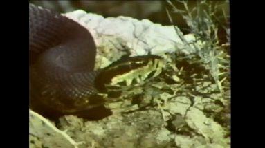 Deadliest Snakes in America, Bird Wood Carvings | Time Warp Classics