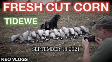 New York Early Season Goose HUNT 2021 | KEOvlogs