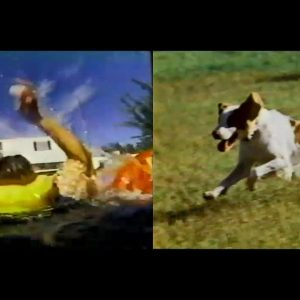 Water Survival Course, and the Brittany Spaniel  | Time Warp Classics